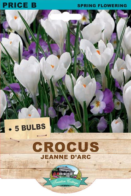 Picture of CROCUS - JEANNE C'ARC