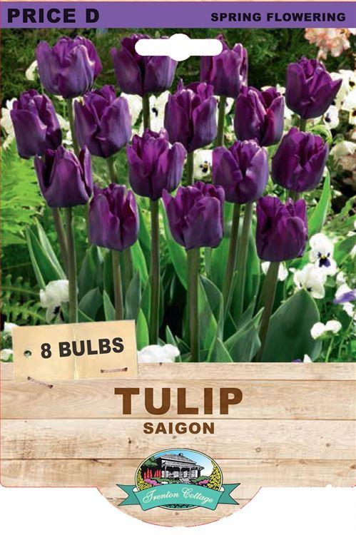 Picture of TULIP - SAIGON