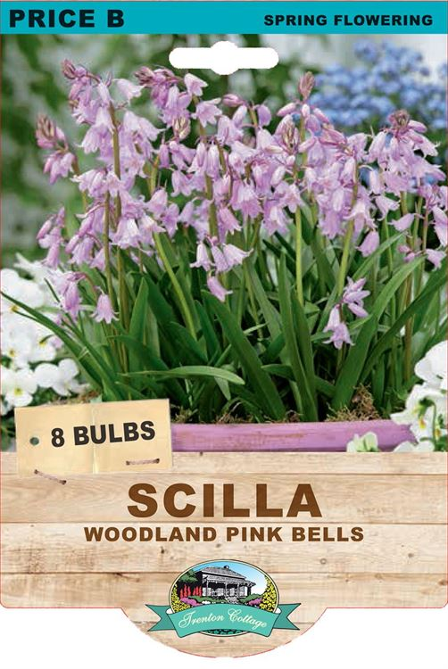 Picture of SCILLA - PINK BELLS