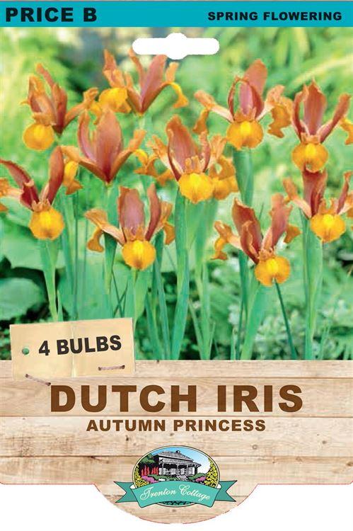 Picture of DUTCH IRIS - AUTUMN PRINCESS