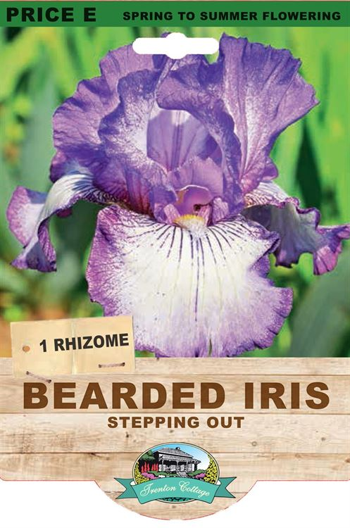 Picture of BEARDED IRIS - STEPPING OUT
