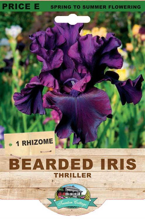Picture of BEARDED IRIS - THRILLER