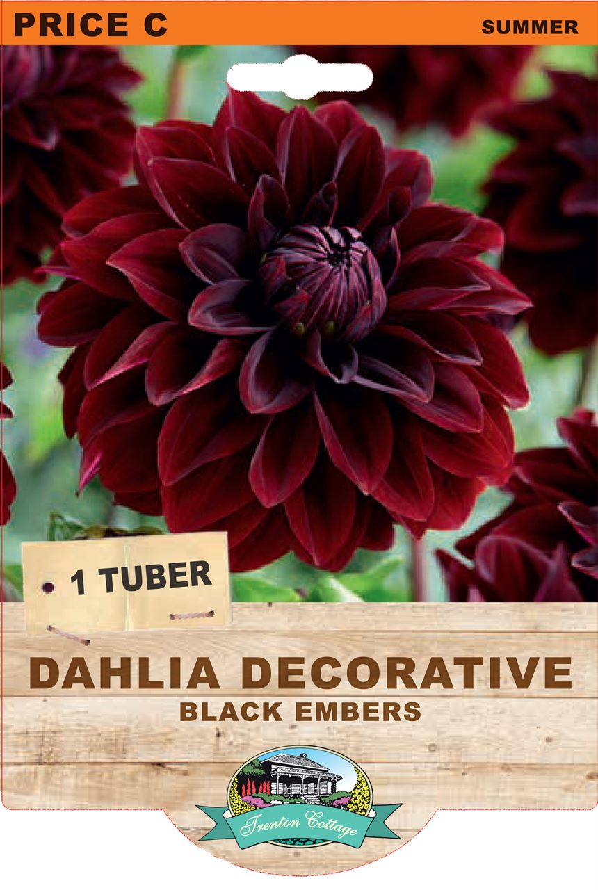 Trenton Cottage Dahlia Decorative Black Embers