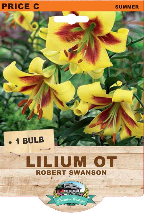 Picture of LILIUM OT - ROBERT SWANSON