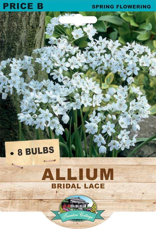 Picture of ALLIUM - BRIDAL LACE