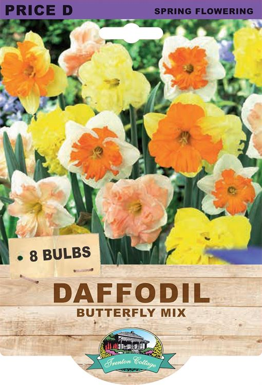 Picture of DAFFODIL - BUTTERFLY MIX