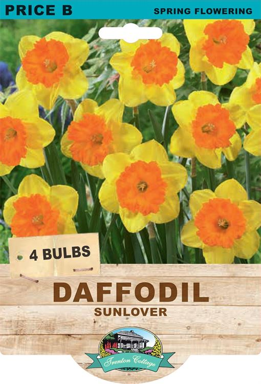 Picture of DAFFODIL - SUNLOVER
