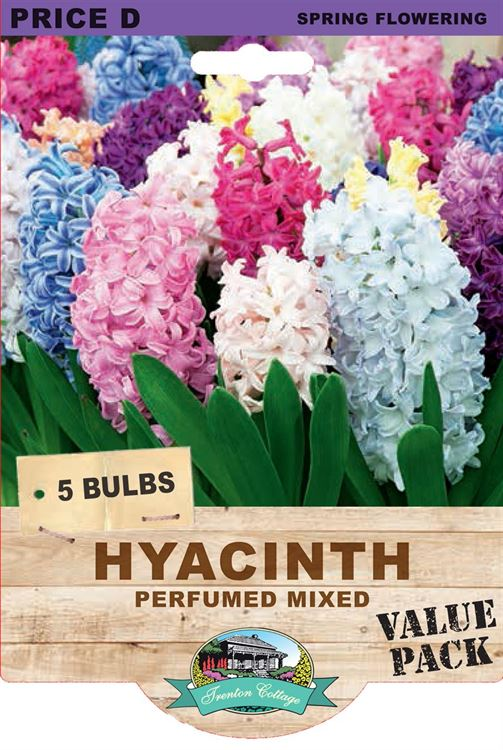 Picture of HYACINTH - PERFUMED MIXED