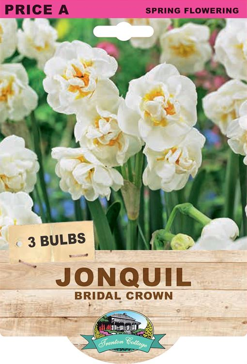 Picture of JONQUIL - BRIDAL CROWN