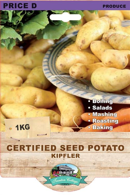 Picture of CERTIFIED SEED POTATO - KIPFLER