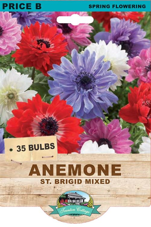 Picture of ANEMONE - ST. BRIGID MIXED