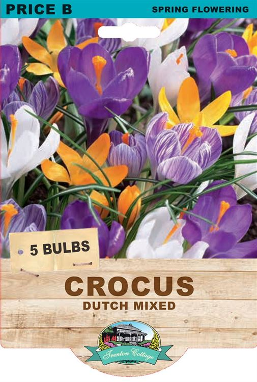 Picture of CROCUS - DUTCH MIXED