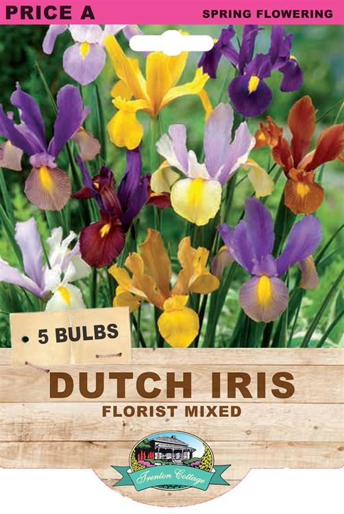 Picture of DUTCH IRIS - FLORIST MIXED