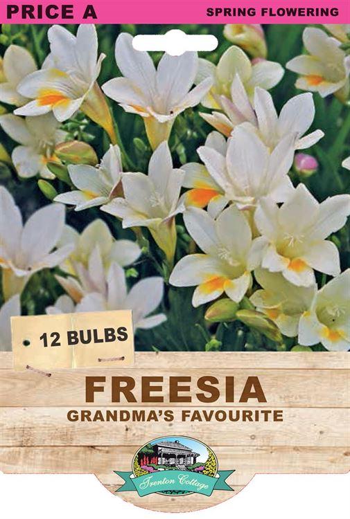 Picture of FREESIA  - GRANDMA'S FAVOURITE