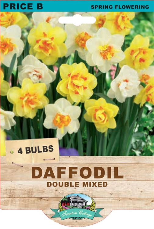 Picture of DAFFODIL - DOUBLE MIXED