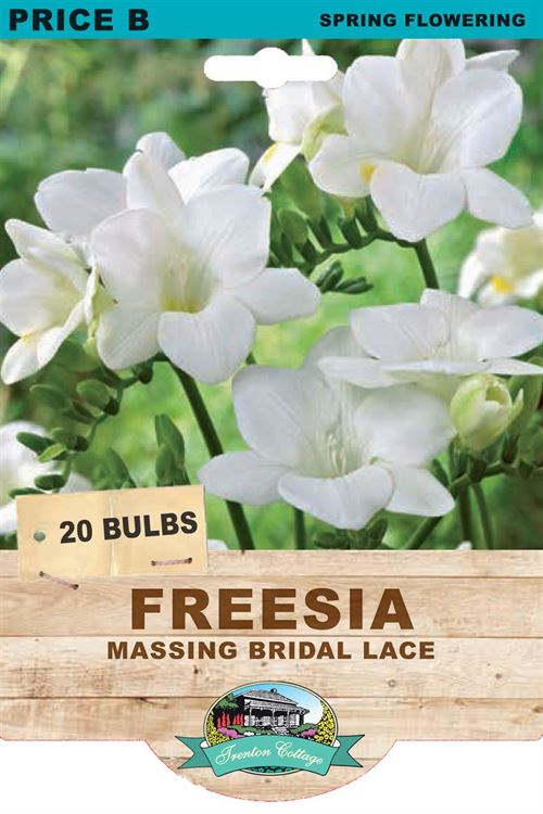 Picture of FREESIA - MASSING BRIDAL LACE
