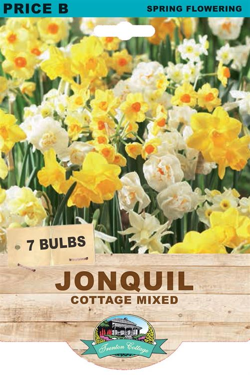 Picture of JONQUIL - COTTAGE MIXED