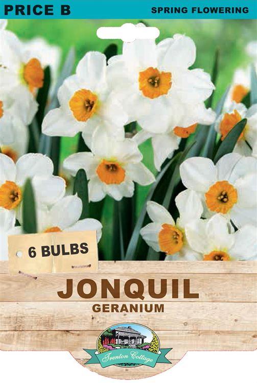 Picture of JONQUIL - GERANIUM