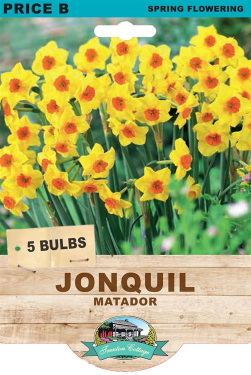 Picture of JONQUIL - MATADOR