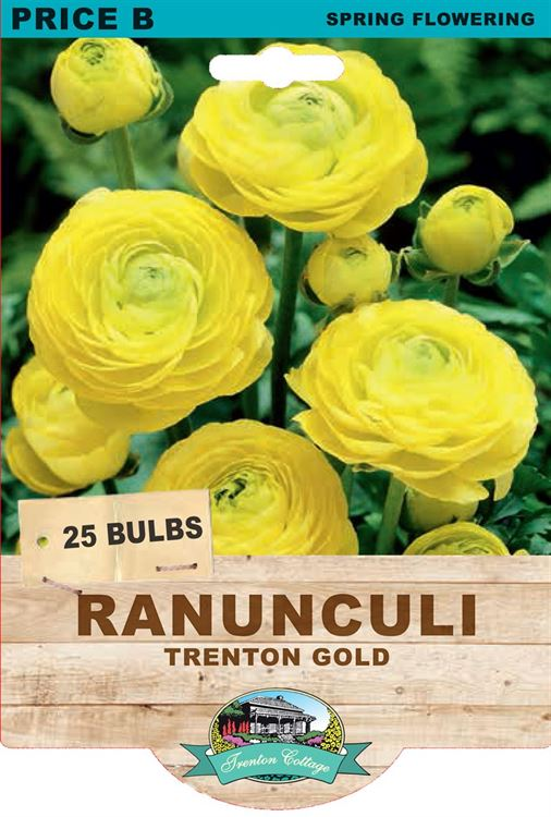 Picture of RANUNCULI - TRENTON GOLD