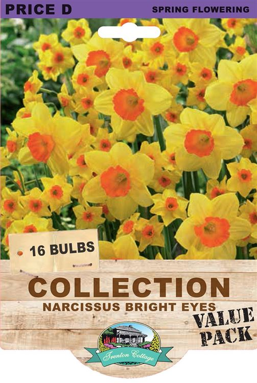Picture of COLLECTION - NARCISSUS BRIGHT EYES