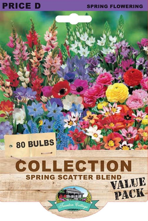 Picture of COLLECTION - SPRING SCATTER BLEND