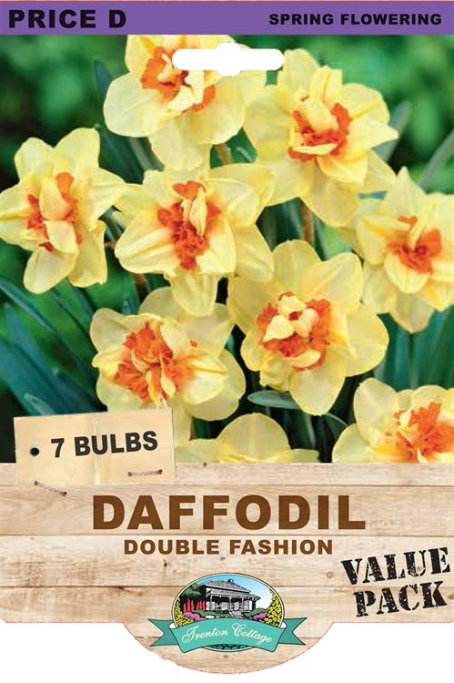 Picture of DAFFODIL - DOUBLE FASHION
