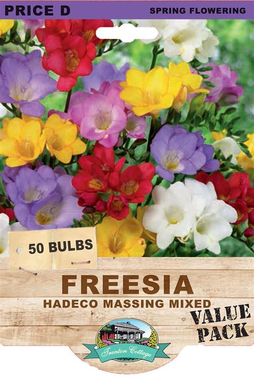 Picture of FREESIA  - HADECO MASSING MIXED