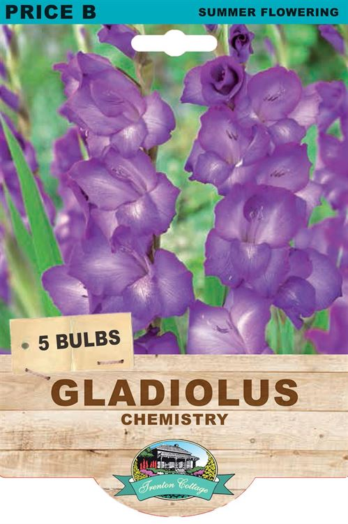 Picture of GLADIOLUS - CHEMISTRY