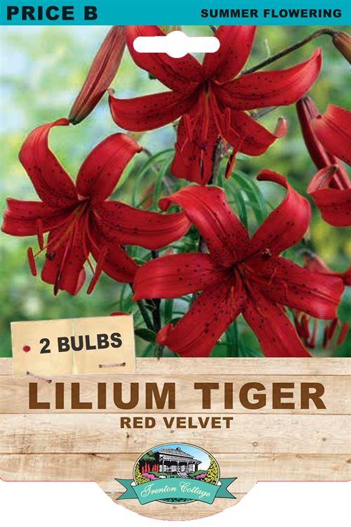 Picture of LILIUM TIGER - RED VELVET