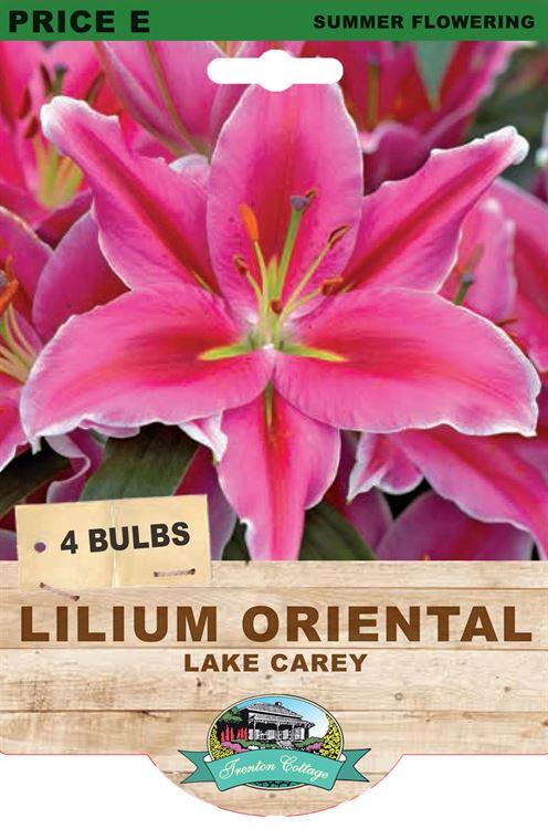 Picture of LILIUM ORIENTAL - LAKE CAREY