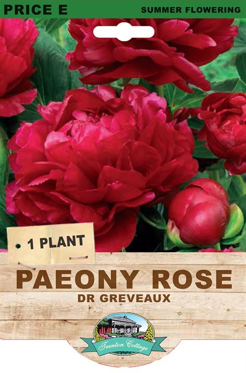Picture of PAEONY ROSE - DR GREVEAUX