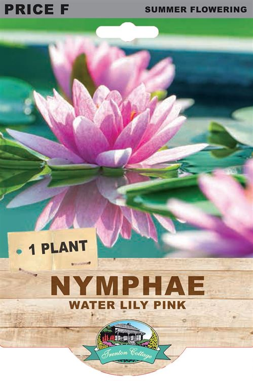 Picture of NYMPHAE - WATER LILY PINK