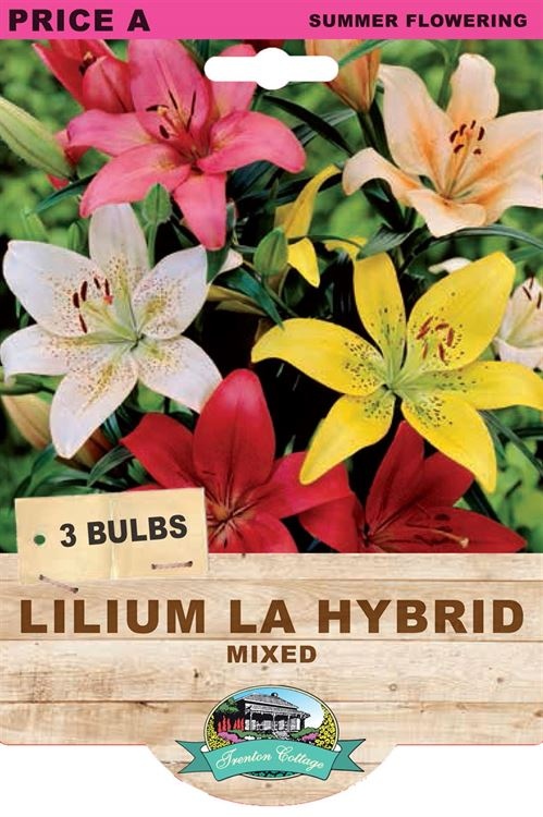 Picture of LILIUM LA HYBRID - MIXED