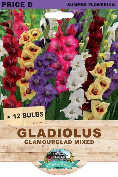 Picture of GLADIOLUS - GLAMOURGLAD MIXED