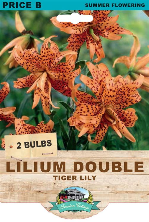 Picture of LILIUM DOUBLE - TIGER LILY