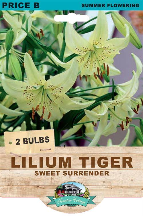 Picture of LILIUM TIGER - SWEET SURRENDER
