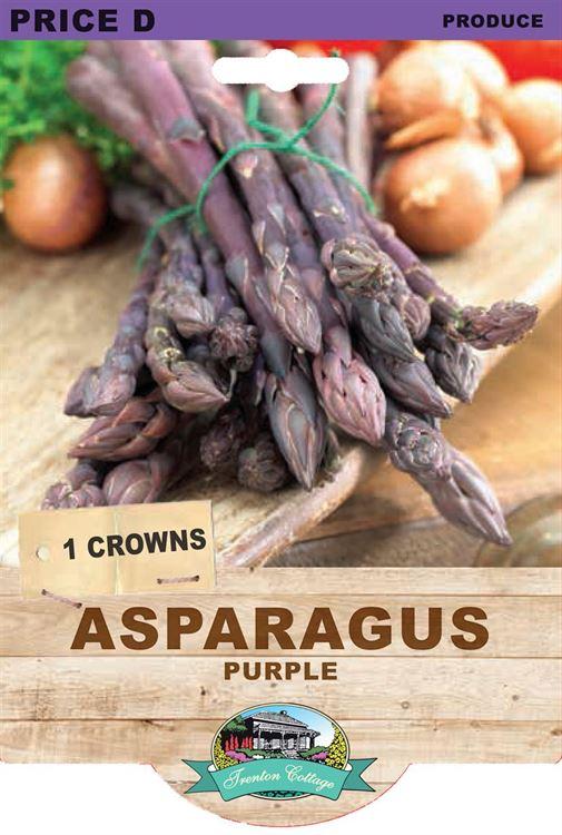 Picture of ASPARAGUS - PURPLE